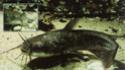 Les espèces les plus courantes Poisso10