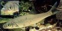 Les espèces les plus courantes Vandoi10