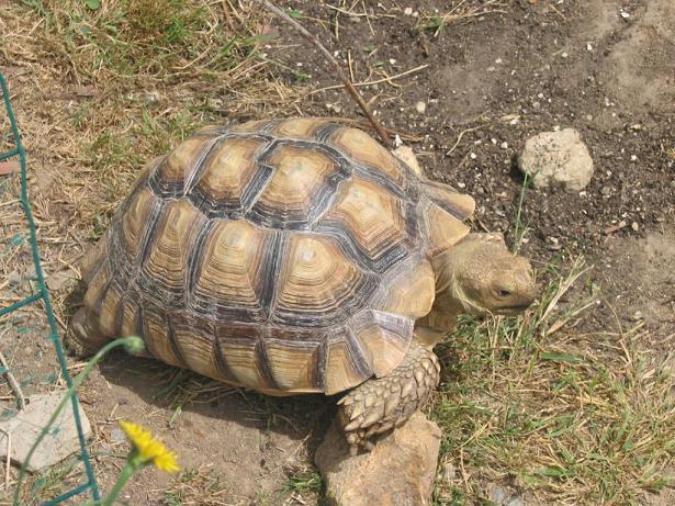 recherche tortue de terre