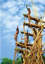 DI07 Bunlap, ile Pentecote, Vanuatu:saut du Gaul (teminé) Saut10