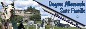 Dogues Allemands Sans Famille