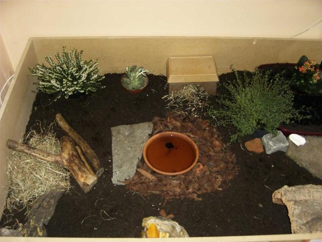 terrarium pour tortue terrestre trouvez le meilleur prix sur voir avant d 39 acheter. Black Bedroom Furniture Sets. Home Design Ideas