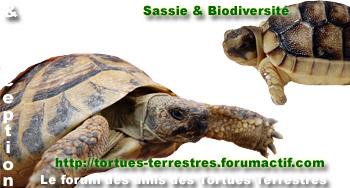 Espace r�serv� aux tortues