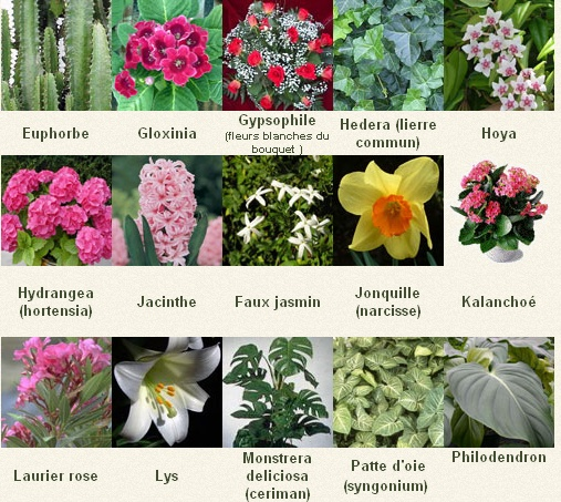 Les plantes toxiques pour les animaux
