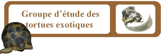 Groupe d'études des tortues exotiques