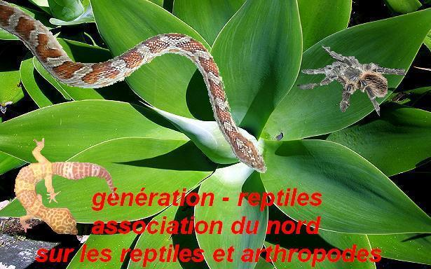 g�n�ration-reptiles