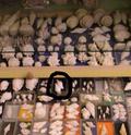 armoire pour fossiles Dscf6410