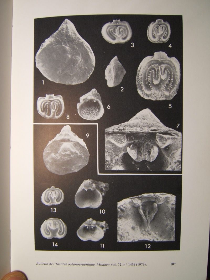 TREFUMEL : 1 espèce des faluns (mollusque ?, bryozoaire ?..) Lacaze11
