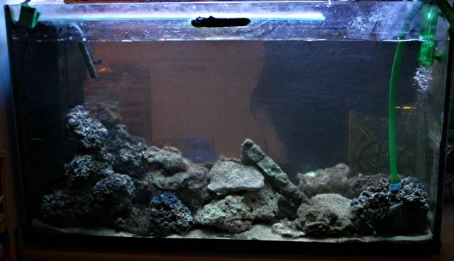 Discussion sur l'art d'éclairer un bac d'eau de  mer .... - Page 3 Bac_so10