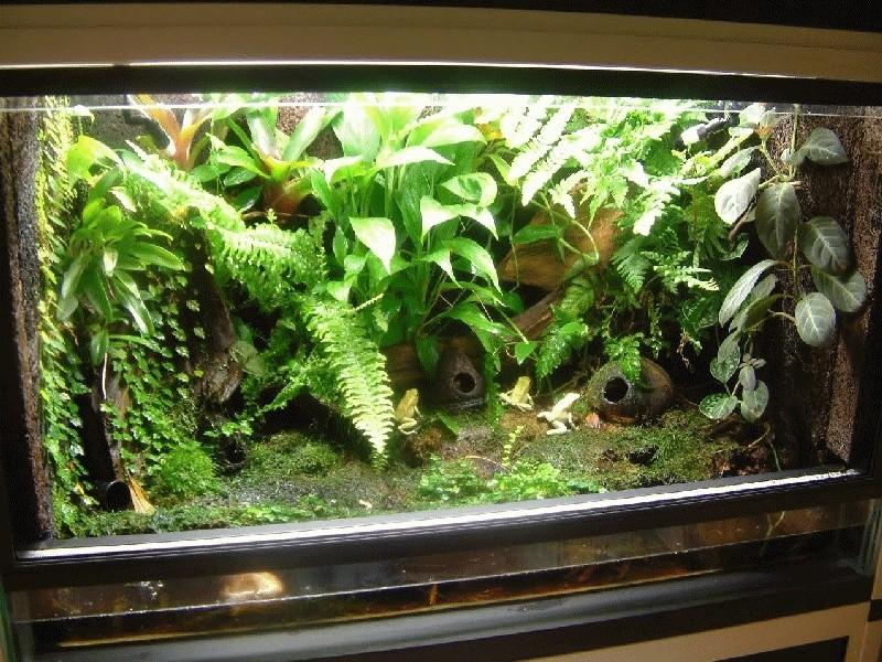 decor terrarium dendrobate