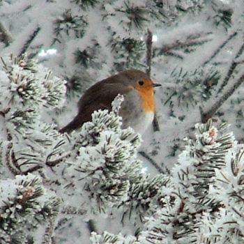 Nature et animaux oiseaux oiseaux en hiver for Oiseaux de jardin au printemps