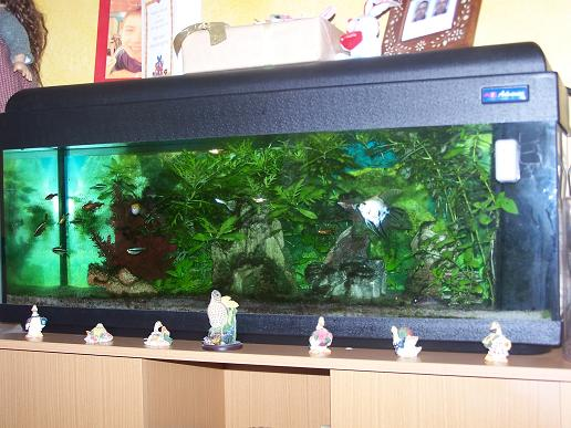 Cause d m nagement vends poisson aqua meuble for Meuble aquarium 100 x 30