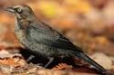 http://i12.servimg.com/u/f12/11/05/43/86/th/bird10.jpg