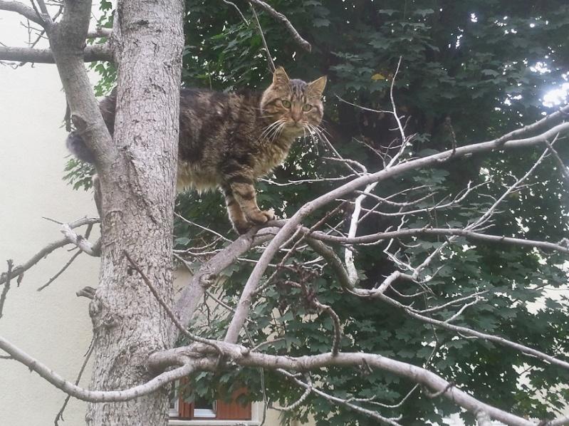 Lulu dans les arbres