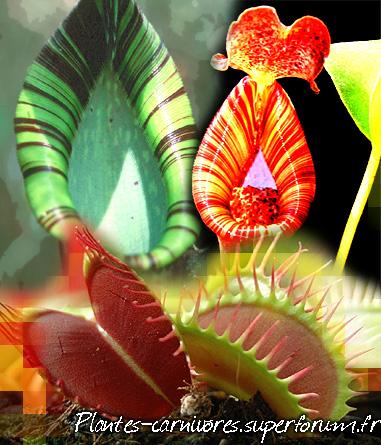 Le Monde Fabuleux des Plantes Carnivores