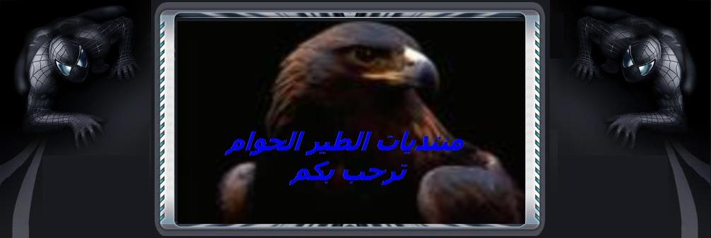 الطير الحوام