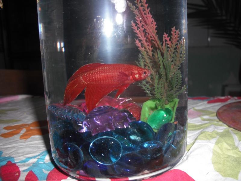 Aquarium combattant for Vente aquarium poisson