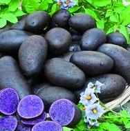 Les pommes de terre originales et vari t s anciennes ou oubli es - Variete de pomme de terre ancienne ...