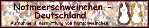 notmeerschweinchen-deutschland.de