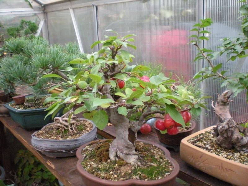 Dove coltiviamo i nostri bonsai pagina 17 for Dove comprare bonsai
