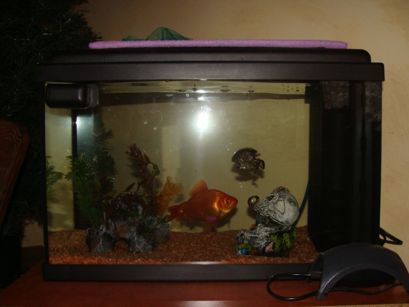 Lancement d 39 un premier aquarium forum poisson rouge for Aquarium 30l combien de poisson rouge