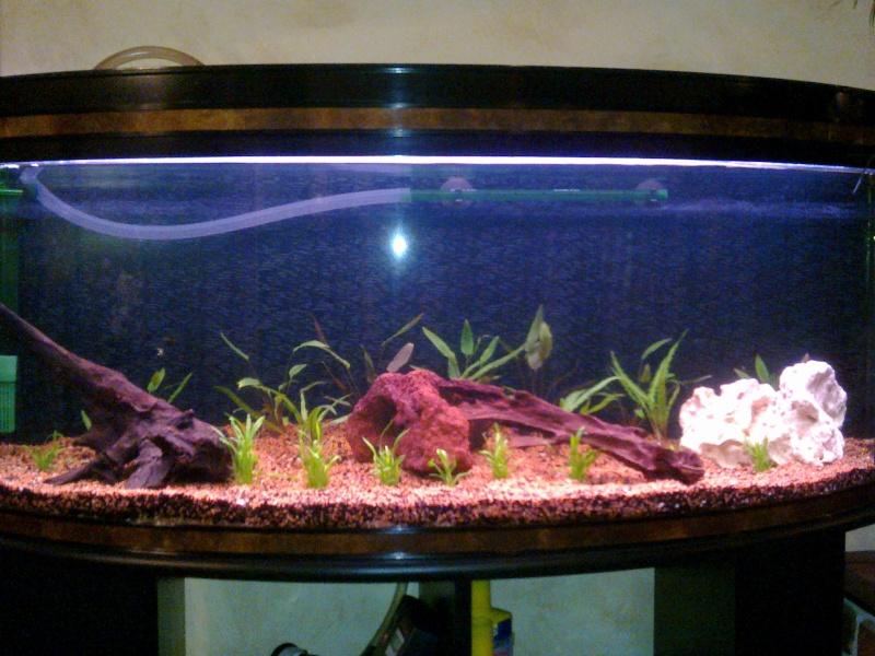 Lancement d 39 un premier aquarium forum poisson rouge for Poisson rouge aquarium 20l