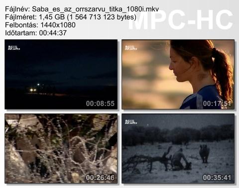 saba_z11.jpg